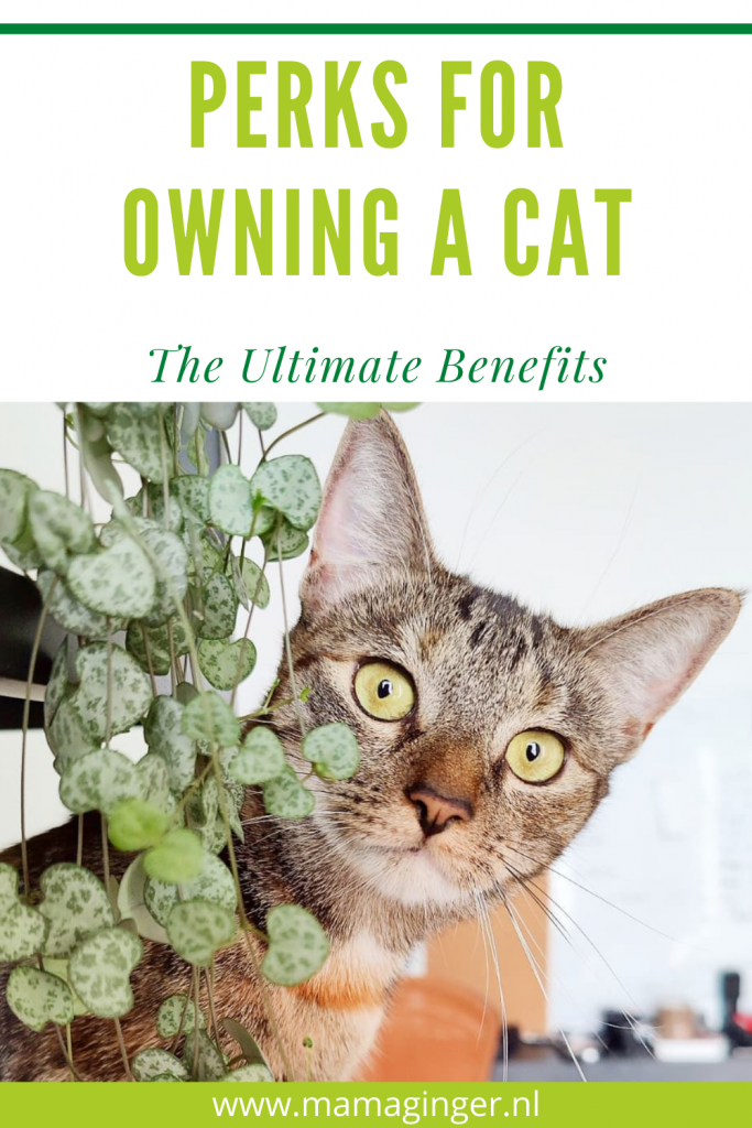 Perks For Owning A Cat: Ultimate Benefits