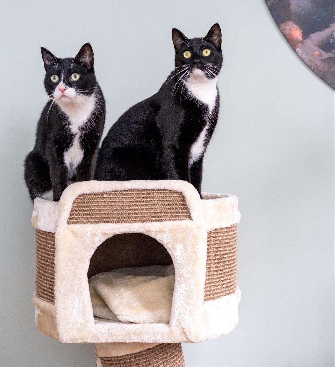 Cat Mama Series - Bas and Gijs